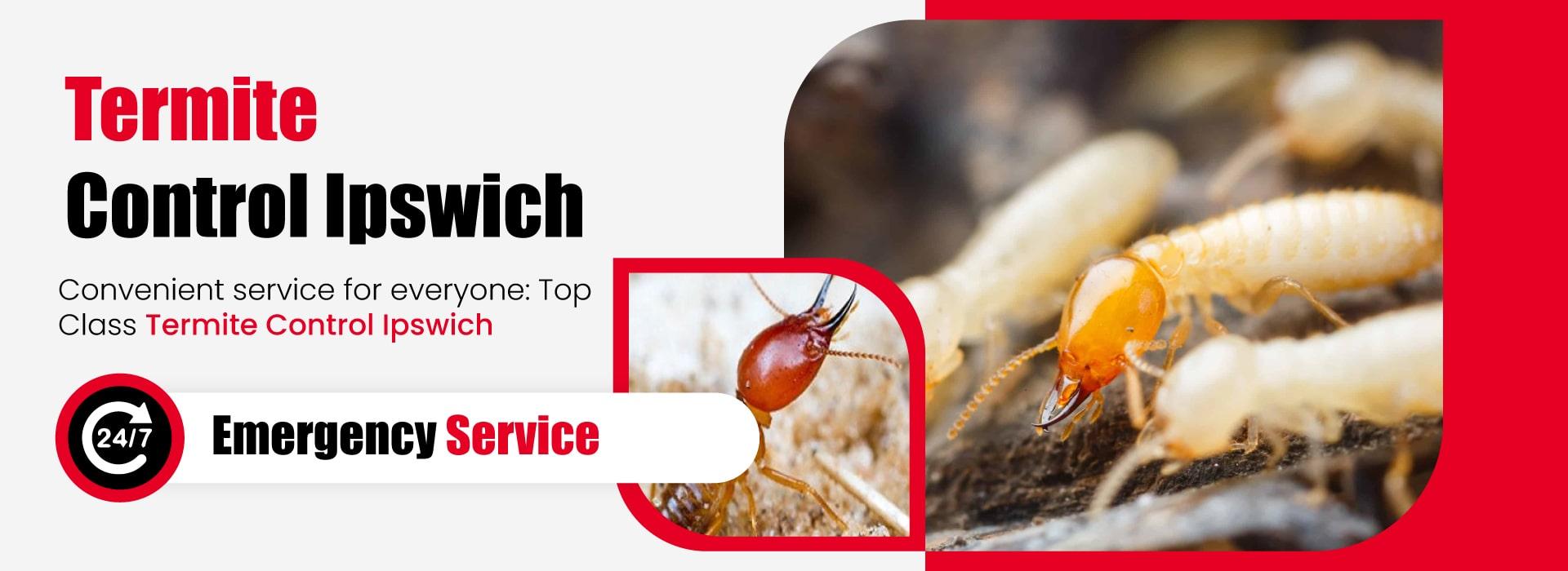 Termite-Control-Ipswich-1